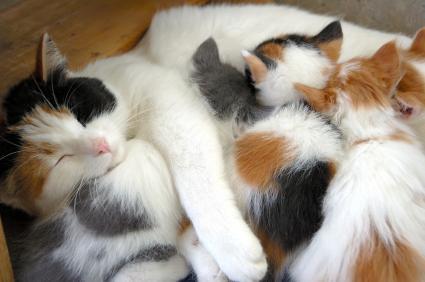 bunchocats