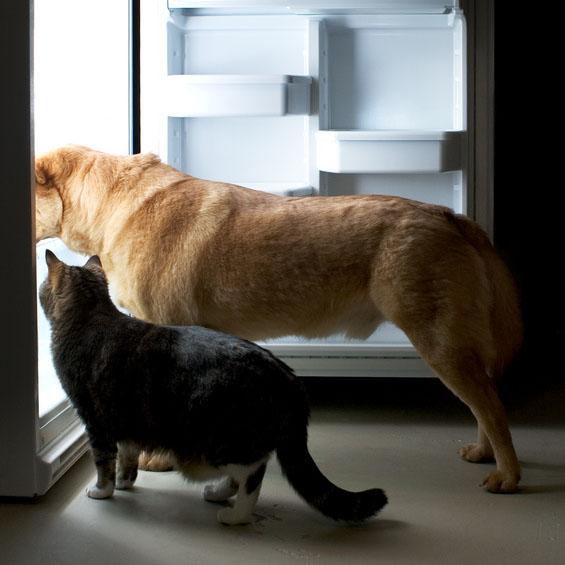 catanddoginfridge
