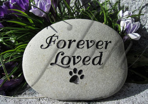 forever-loved-pet-rock